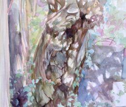 Öreg akác akvarell, papír 60x40 cm 2018.
