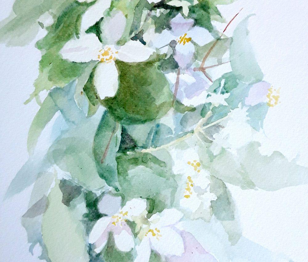 Jázmin akvarell, papír 29x22 cm 2020.