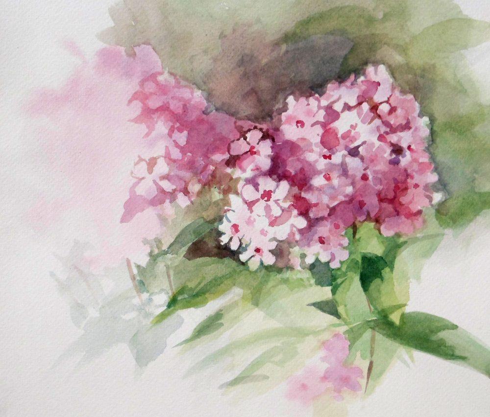 Hortenzia akvarell, papír 22x22 cm 2019.